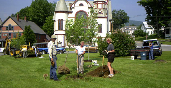 Post image for Planting Trees – all over town