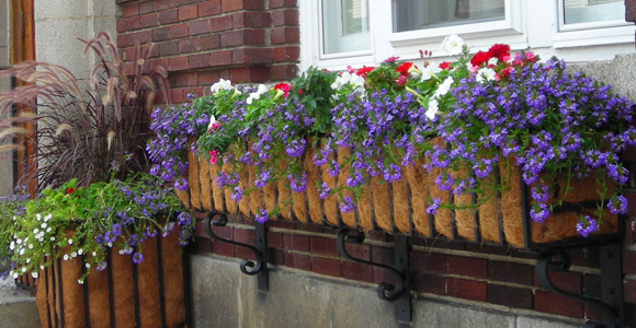 Post image for Planter boxes – Town Hall